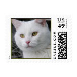 Mr. Cat Portrait - Small Postage