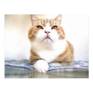Mr Cat Postcard