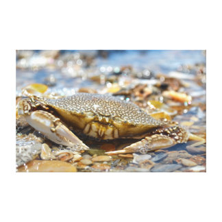 Mr. Crab Canvas Prints