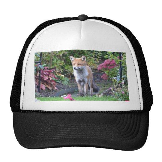 Mr Fox Trucker Hat