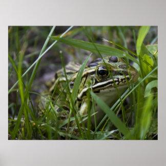 Mr. Frog print