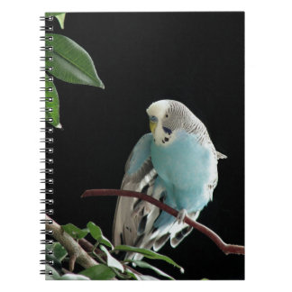 Mr. Jill Budgie Notebook