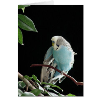 Mr. Jill Budgie Stationery Note Card