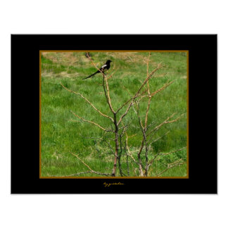 Mr. Magpie View Photo Poster