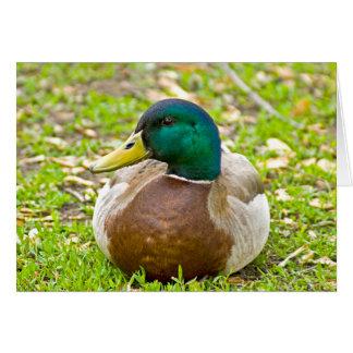 Mr. Mallard the Duck Card