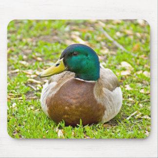 Mr. Mallard the Duck Mouse Pad