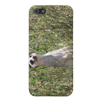 Mr Meerkat Cover For iPhone 5