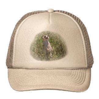 Mr Meerkat Trucker Hat