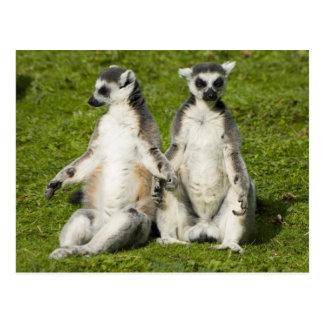 Mr & Mrs Lemur Postcards