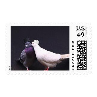 Mr. & Mrs. Pigeon Love Birds Wedding Stamps