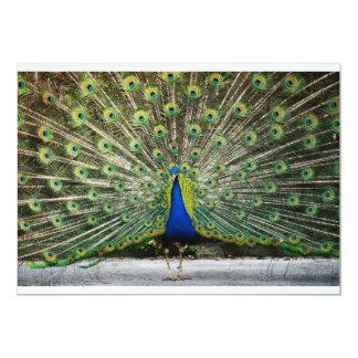 Mr. Peacock Invitation