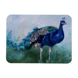 Mr. Peacock Magnet