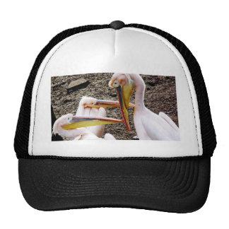 Mr  Pelican's Look Trucker Hat