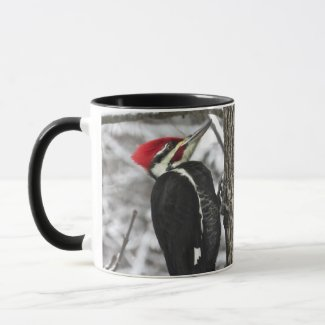 Mr. Pileated Woodpecker Bird Mug