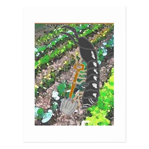 Mr. Pilly Pillbug Has Fun In The Garden Post Cards