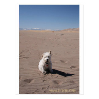 Mr. Pish at Great Sand Dunes National Park Postcard