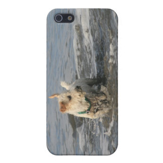 Mr. Pish at Ruby Beach Cover For iPhone SE/5/5s