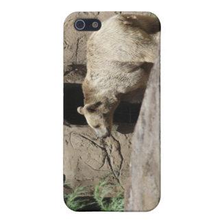 Mr Polar Bear iPhone 5 Case