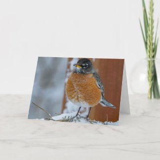 Mr Robin Card