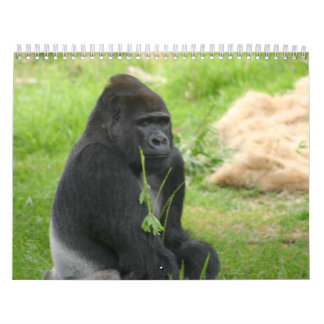 Mr Silverback Calendar