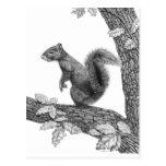 Mr Squirrel - Blank Postcard