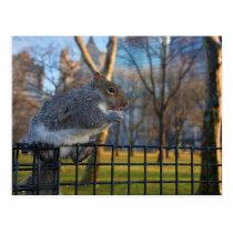 Mr Squirrel Eats A Walnut, Battery Park, NYC Postcard