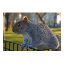 Mr Squirrel Looking Thoughtful, Battery Park, NYC Postcard