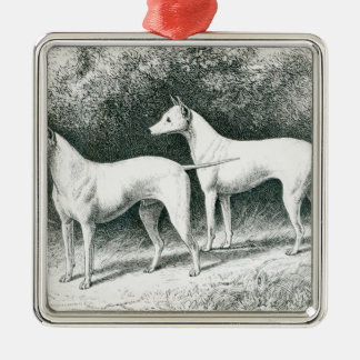 Mr. Vero Shaw's White English Terriers Metal Ornament