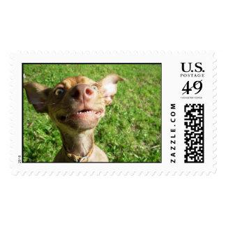 Mr. Wrinkles - chiweenie Postage