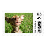 Mr. Wrinkles - chiweenie Stamp