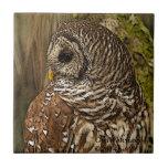 Mrs Barred Owl Ceramic Tiles