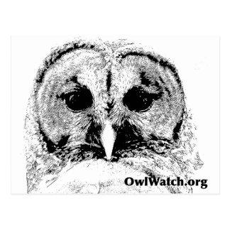 Mrs Barred Owl - Mar 2015 Postcard