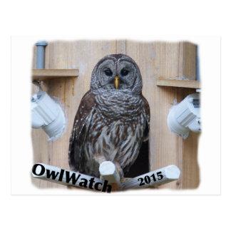 Mrs Barred Owl - OctoBox Nest Postcard