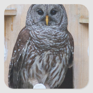 Mrs Barred Owl - OctoBox Nest Square Sticker