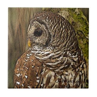 Mrs Barred Owl Tile