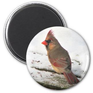 Mrs.Cardinal Bird Magnet