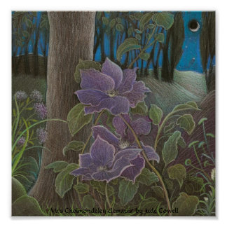 'Mrs Cholmondeley clematis by Moonlight' Poster