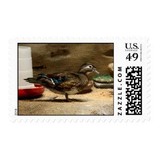 Mrs Wood Duck Postage Stamp