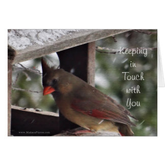 Ms del cardenal 9194 - personalizar para cualquier tarjeta de felicitación
