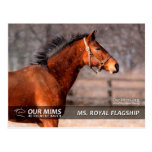 Ms. Royal Flagship postcard