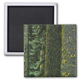 Mt. Ashland, Rogue RIver National Forest, 2 Inch Square Magnet
