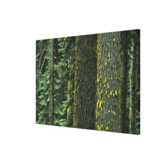 Mt. Ashland, Rogue RIver National Forest, Canvas Print