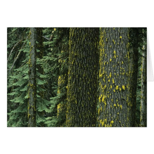 Mt. Ashland, Rogue RIver National Forest, Card