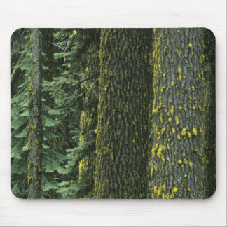 Mt Ashland Rogue RIver National Forest Mousepad