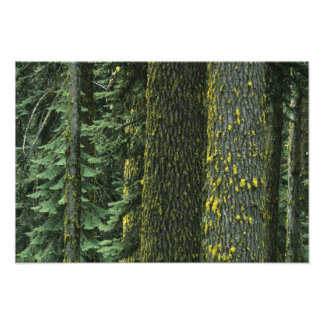 Mt. Ashland, Rogue RIver National Forest, Photograph