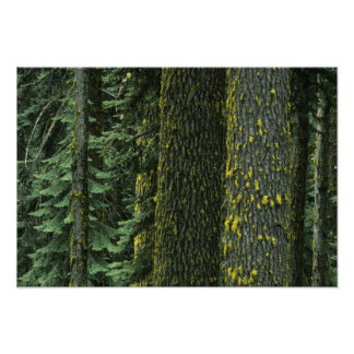 Mt. Ashland, Rogue RIver National Forest, Poster