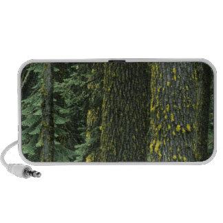 Mt. Ashland, Rogue RIver National Forest, Laptop Speakers