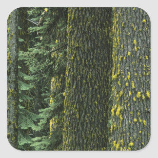 Mt. Ashland, Rogue RIver National Forest, Square Sticker