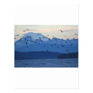 Mt Baker w birds Postcard