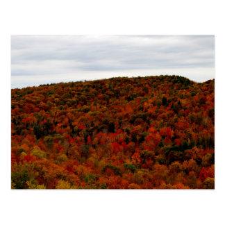 MT Cardigan Views In Fall Postcard